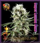 Super Lemon Haze feminised best weed pick n mix seeds for sale